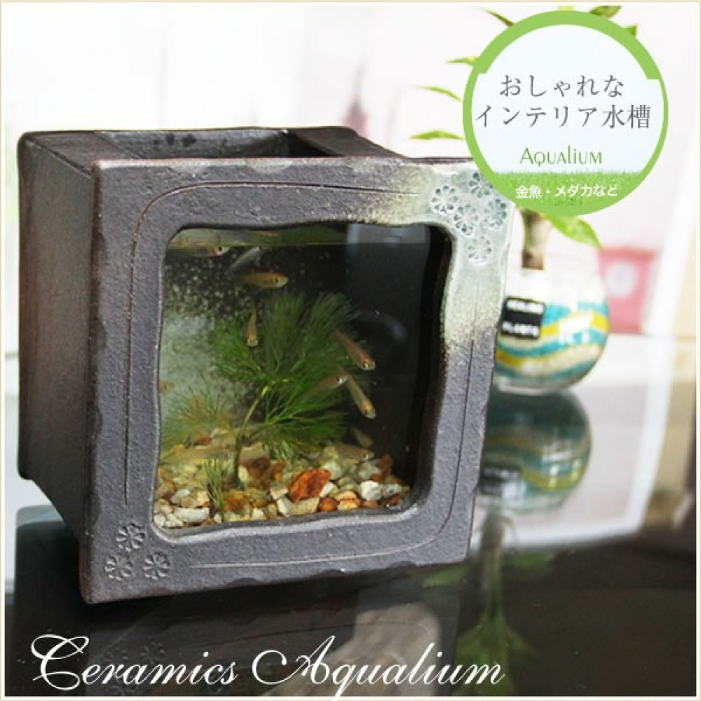 Fish tank japan - Aquarium Fish Tank Kingyo Goldfish Shigaraki Yaki And Glass Made In Japan